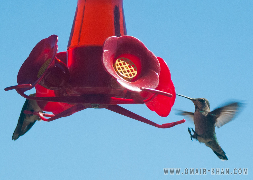 Hummingbirds at a feeder