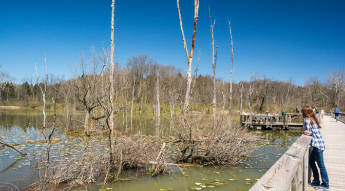 Beaver Marsh Boardwalk, Cuyahoga Valley National Park, Ohio