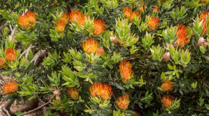 Kirstenbosch Botanical Garden, Cape Town, Western Cape, South Africa
