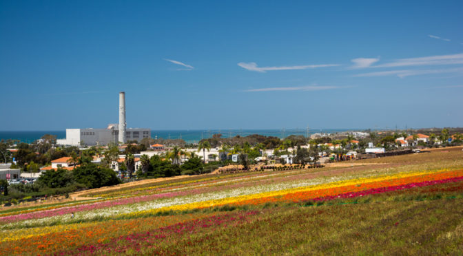 Carlsbad Flower Fields, Carlsbad, California, USA