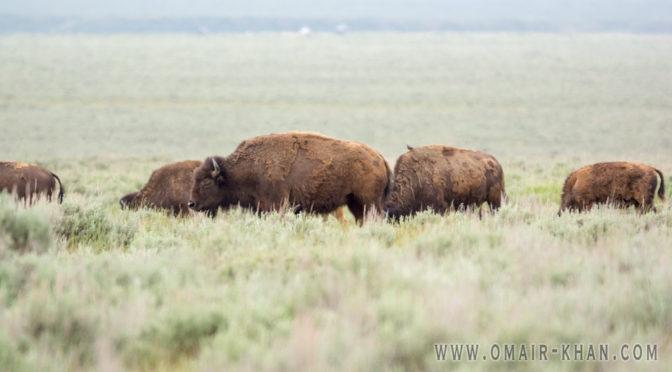 Antelope Flats, Jackson Hole, Wyoming