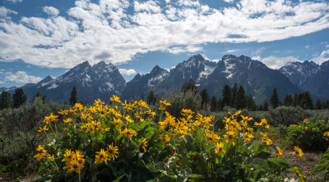 Mountain View Turnout, Grand Teton National Park, Wyoming